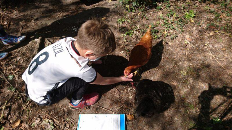Hühner zu Besuch